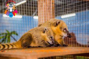 Контактный зоопарк – развлечение для всей семьи