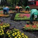 В парке «Победа» высадили 5 тысяч цветов